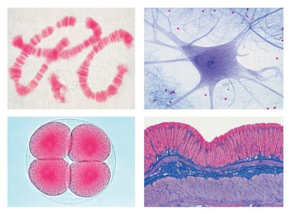 Schulserie D (Ergänzung zu A, B und C). 50 Mikropräparate