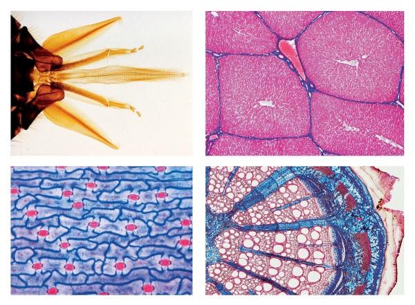 Schulserie B (Ergänzung zu A). 50 Mikropräparate