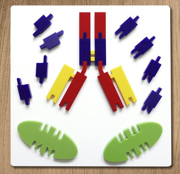 Antikörper Funktionsmodell. Corona Modell