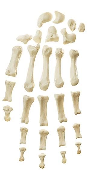 Handknochen