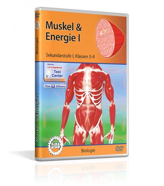 Muskel & Energie lehrfilm