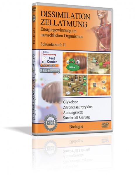 DVD - Dissimilation - Zellatmung