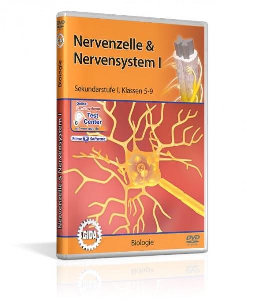 Real 3D Software - Nervenzelle & Nervensystem I