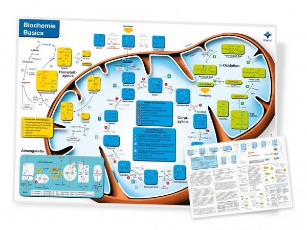 Lerntafel Biochemie