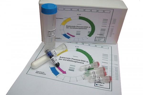 Bakterielle Plasmid - D N A in der GEL-Elektrophorese