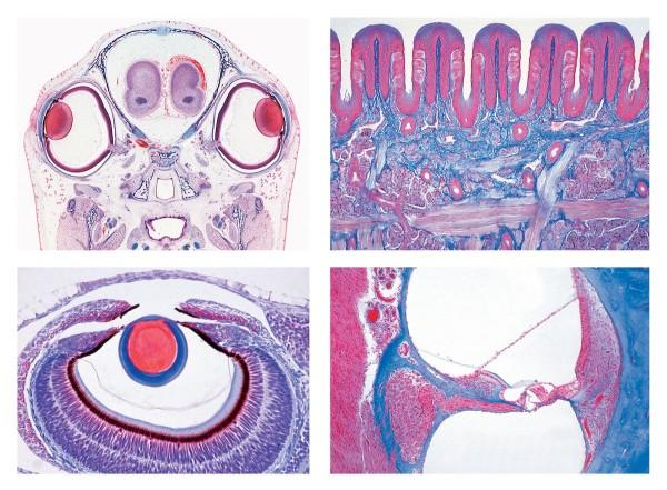 Serie III. Sinnesphysiologie, 16 Mikropräparate