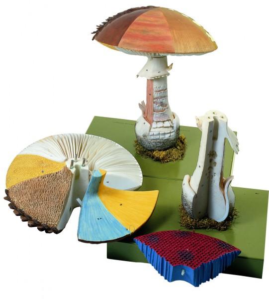 Aufbau von Hutpilzen