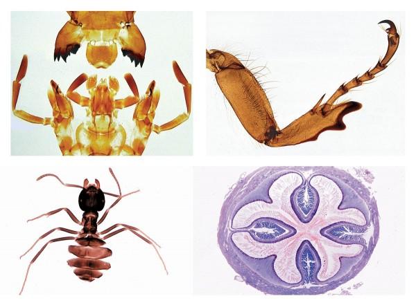 Insekten, Ergänzungsserie, 36 Präparate, Erweiterung von Serie 4300