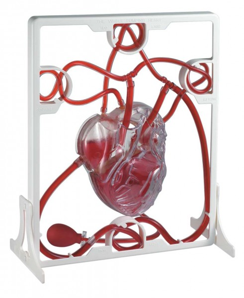 Blutkreislauf Modell