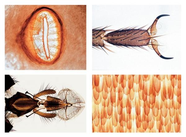 Insekten 25 Mikropräparate