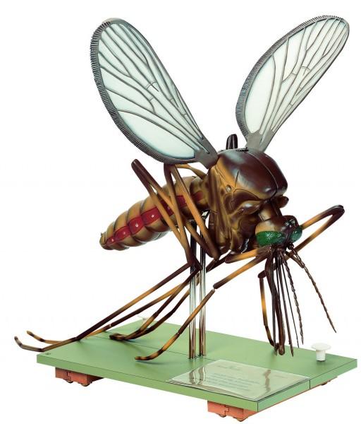 Modell einer Stechmücke