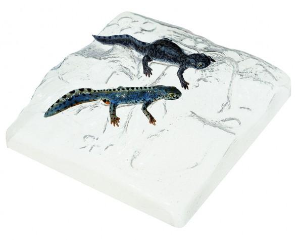 Berg- oder Alpenmolch, Männchen und Weibchen in Wassertracht