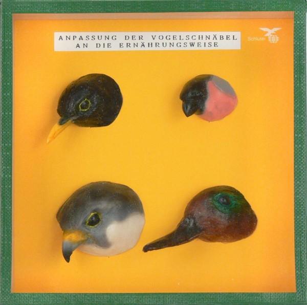 Typische Vogelschnäbel