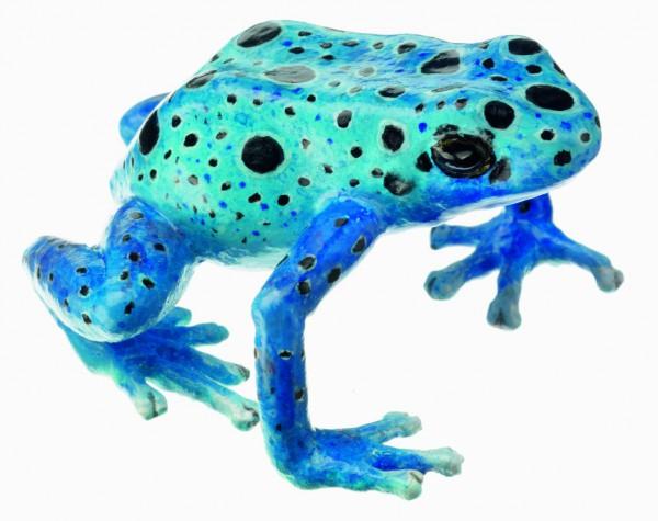 "Blauer Pfeilgiftfrosch, Dendrobates Tinctorius ""Azureus"""