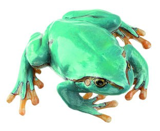 Laubfrosch, seltene hellblaue Varietät, Weibchen