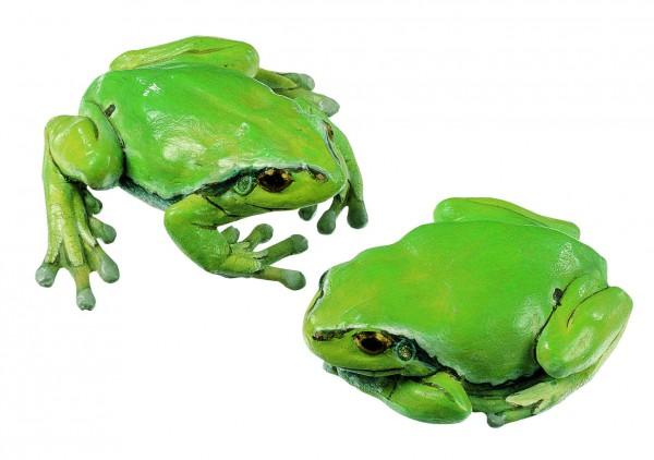 Laubfrosch, Weibchen (2 Modelle)