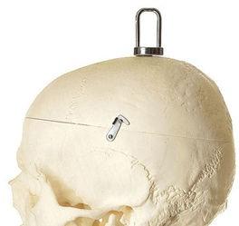 Künstliches Homo-Skelett